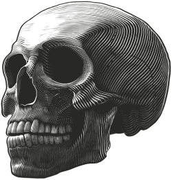 Drawing of a human skull